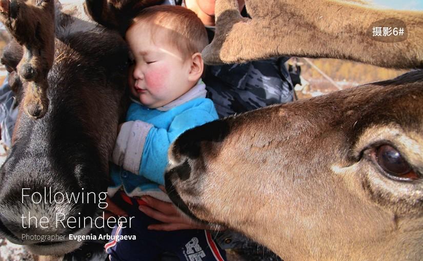 驯鹿森林图片集Evgenia Arbugaeva{摄影集6#}跟随驯鹿的旅程的图片