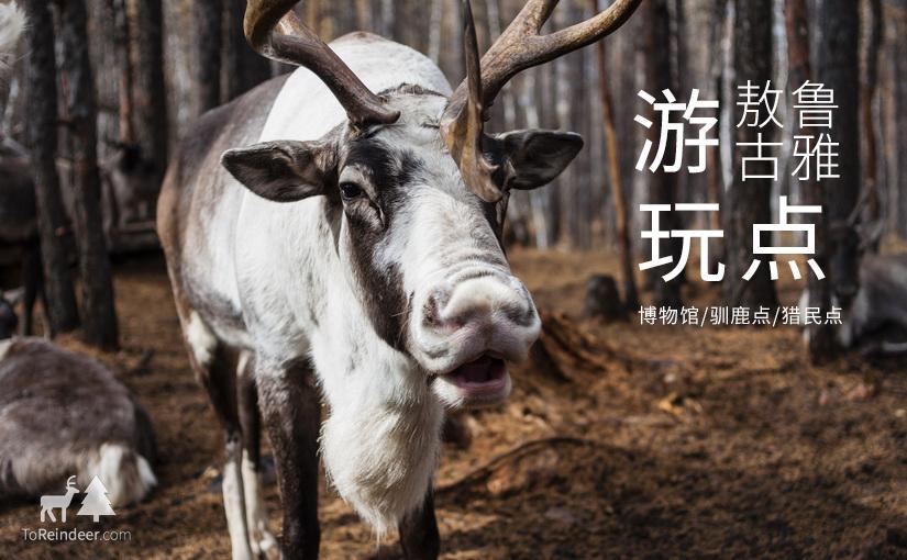 驯鹿森林小专题敖鲁古雅{专题1#}敖鲁古雅初行攻略的图片 第8张