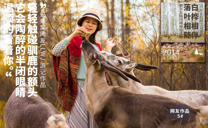 驯鹿森林游记/攻略LLWJ{网友作品5#}白桦相伴,落叶相随-额尔古纳河秋日之旅的图片