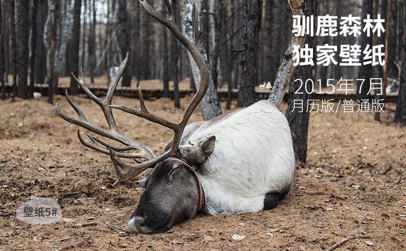 驯鹿森林小玩意{电脑壁纸5#}驯鹿森林独家壁纸-7月月历版/普通版的图片