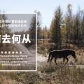 驯鹿森林电影/纪录片/舞台剧bbc{纪录片12#}BBC纪录片Wild China的图片 第11张