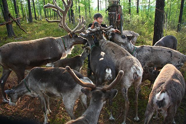 驯鹿森林网友作品分享你们是圣诞明信片上的邮政编码{网友作品9#}我在大兴安岭,寻鹿与遇鹿。的图片 第14张