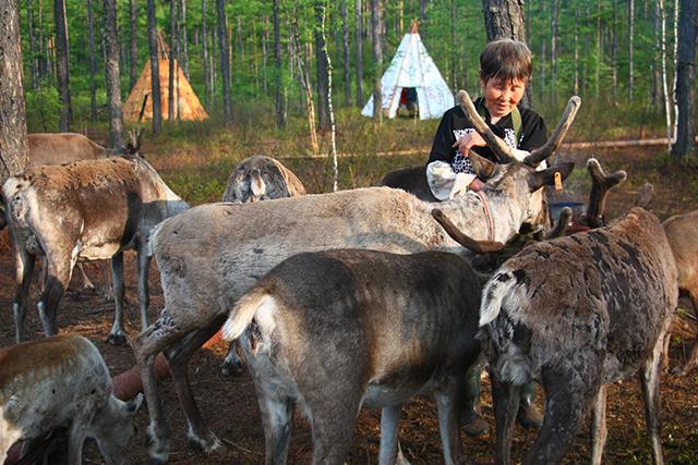驯鹿森林网友作品分享你们是圣诞明信片上的邮政编码{网友作品9#}我在大兴安岭,寻鹿与遇鹿。的图片 第15张