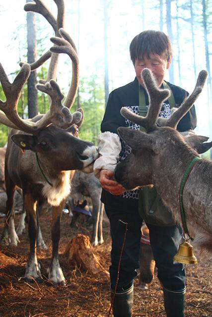 驯鹿森林网友作品分享你们是圣诞明信片上的邮政编码{网友作品9#}我在大兴安岭,寻鹿与遇鹿。的图片 第18张