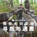 驯鹿森林小专题呼伦贝尔{专题3#}森林小镇的虚与实的图片 第11张