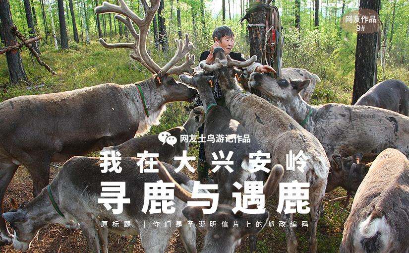 驯鹿森林网友作品分享你们是圣诞明信片上的邮政编码{网友作品9#}我在大兴安岭,寻鹿与遇鹿。的图片