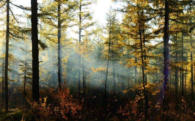 驯鹿森林书籍使鹿部落{书影10#}驯鹿角上的彩带的图片 第6张