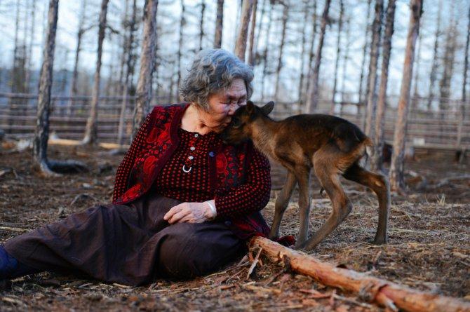 驯鹿森林书籍使鹿部落{书影10#}驯鹿角上的彩带的图片 第8张